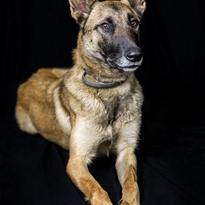Séance photo portrait animaux / portrait chien, photographe Bordeaux