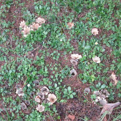 Drôles de champignons cette année au Jardin de Fille...