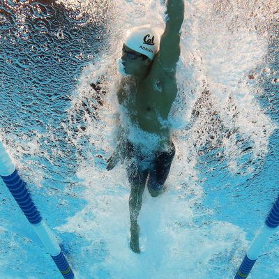 NATATION : LES DIFFERENTS TESTS SUR UNE PREPARATION ANNUELLE