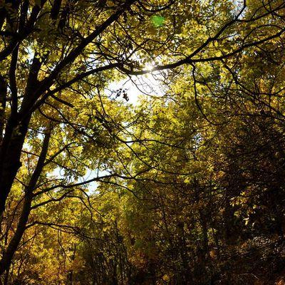Balade en automne