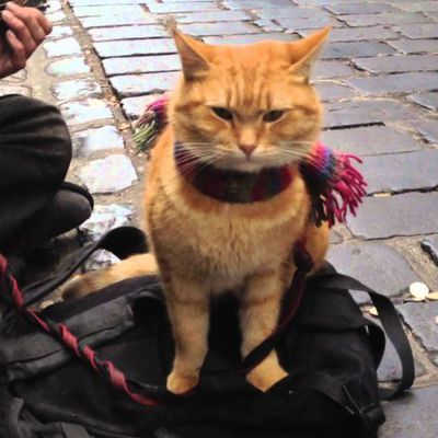 A SPASSO CON BOB - A Street Cat Named Bob