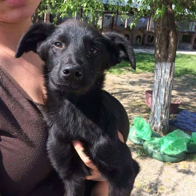 A l'adoption, Liliac, 8 mois, adorable et caline