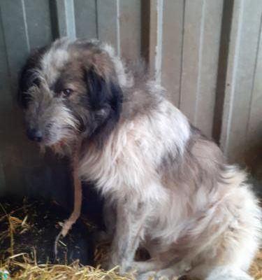 A l'adoption : Momo, croisé berger roumain/mioritic