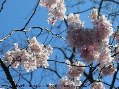Das letzte Wochenbergfest im März und weiterhin Frühling