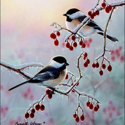 Oiseaux en peinture -Russel Cobane