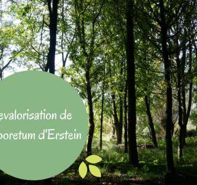 Projet M55 Arboretum