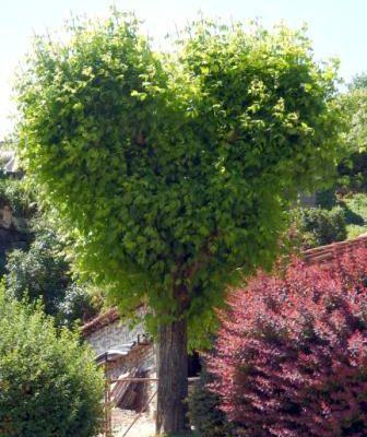 L'arbre de la Saint Valentin