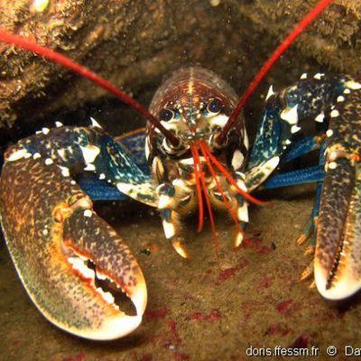 L'effondrement a déjà commencé. De Rugy et la pénurie de homards = François de Rugy démissionne, des questions en suspens