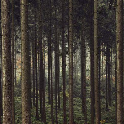 Mein Bild vom Teutoburger Wald #13 – Annika