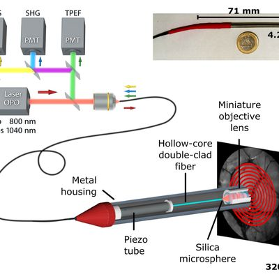New paper: High-resolution multimodal flexible coherent Raman endoscope