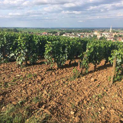 Meursault Clos du Haut Tesson du domaine Buisson-Charles au solstice d'Eté 2018