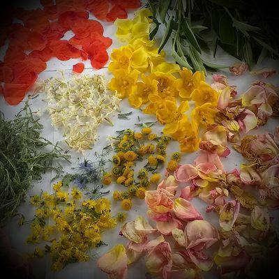 [WICCA] De la récolte à la préparation de mes fleurs et plantes de magie WICCA pour la préparation de mes rituels
