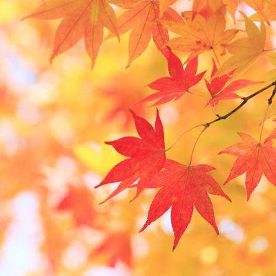 Ode à l'automne... #2