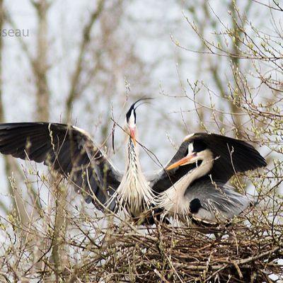 Comment l'on bâtit son nid ...