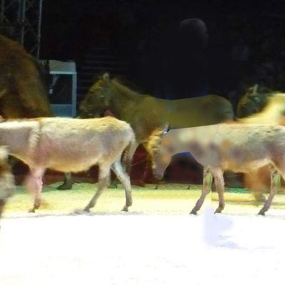 Petits ânes