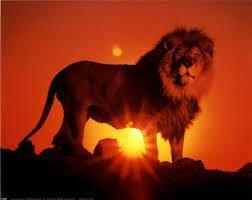 Quatre boeufs et un lion