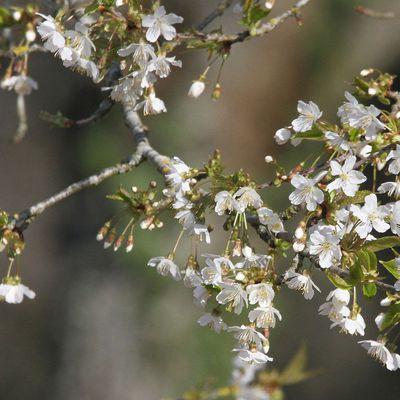 Impressions de printemps