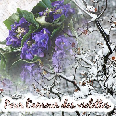Pour l'amour des violettes