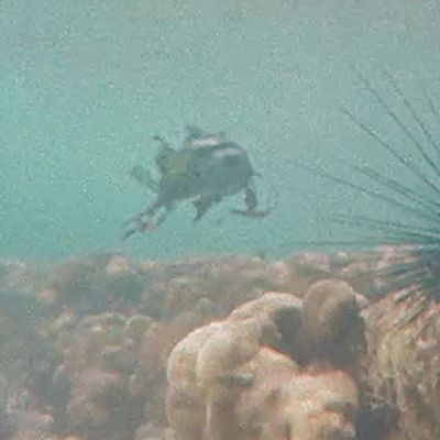 Diver attacked by ALIEN FISH in INDONESIA !!! May 2018