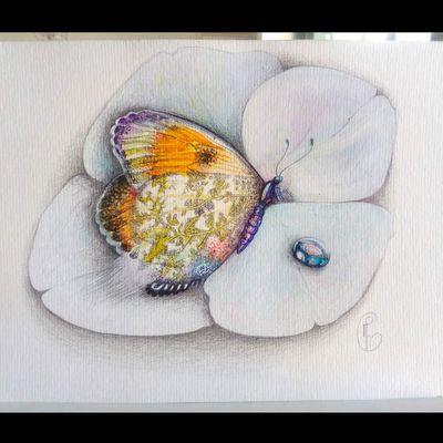 Papillon-fleur dans son hortensia