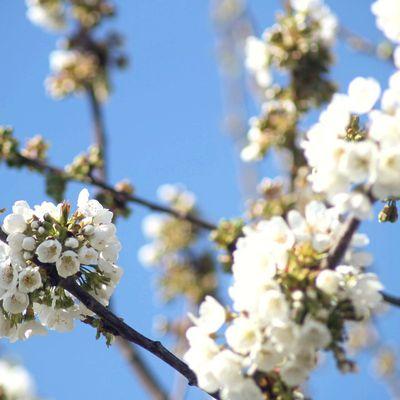 the spring.. magnalia Dei .