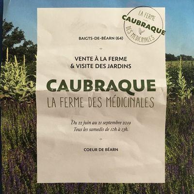 Plantes médicinales: deux super adresses bio en Béarn