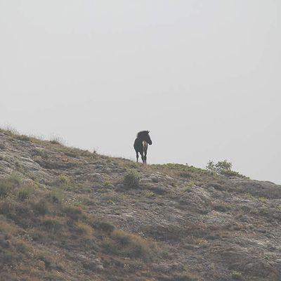 Danger critique d'extinction pour le cheval losino, une magnifique race espagnole - El losino, un caballo en peligro de extinción