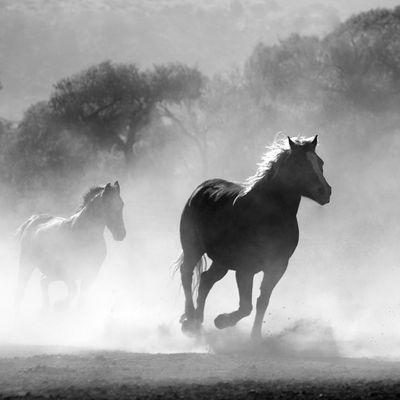 Un conte celte : les trois chevaux de la princesse Rigantona...