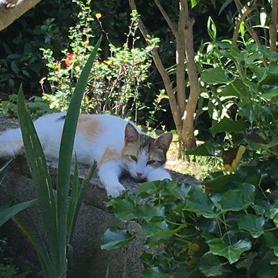 Joli chat indolent dans le jardin...