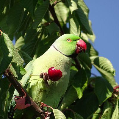 Les nouvelles espèces d'oiseaux en Île de France