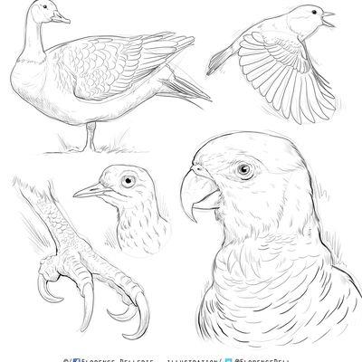 Croquis d'oiseaux