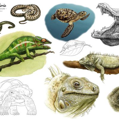 Illustrations naturalistes : serpents, tortues, crocodiles et compagnie