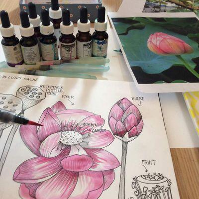 Peindre à l'encre #3 lotus sacré de l'île Maurice.