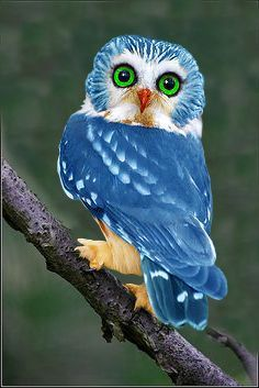 Totem Animals - The Owl