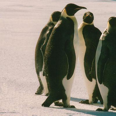 I pinguini di Villa Sperlinga