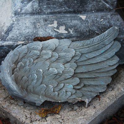 Avec une aile brisée