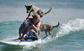 Chris de Aboitiz Dog Surfing
