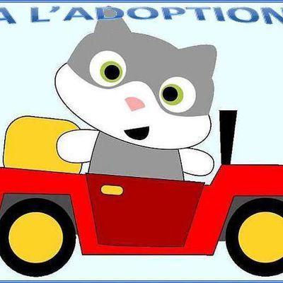 """Nouvelle page """"A l'adoption"""""""