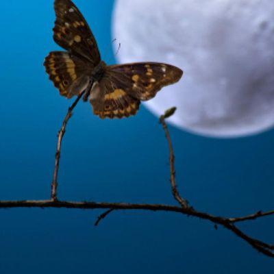 Nourrit ton papillon et déploie tes ailes,