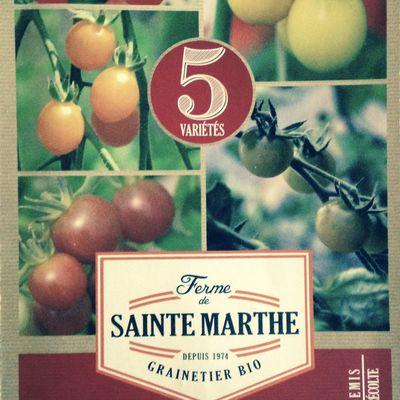 Les tomates cerise en mélange, suite des observations et commentaire sur les erreurs commises...