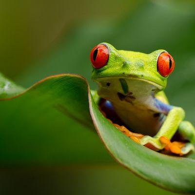 Amphibiens et batraciens