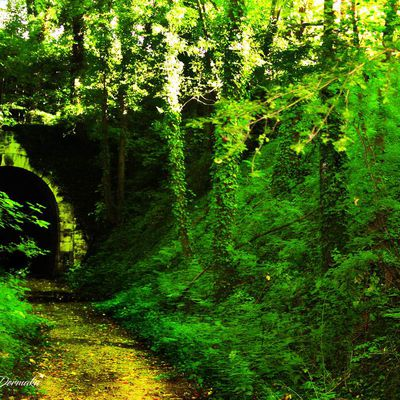 Nature-Foret woods