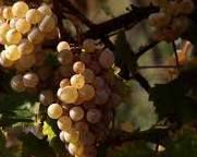 White Blend Wines Producers Sierra Foothills California #