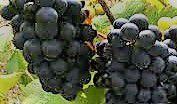 #Rose Wine Producers Mendocino Valley California
