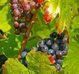 #Brouilly Producers Beaujolais Region France page 4