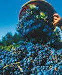 #Red Sangiovese Wine Producers New Jersey Vineyards