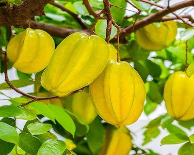 Avez-vous entendu parler de ce fruit miracle ?? Il contrôle le diabète, abaisse le cholestérol et l'inflammation des combats