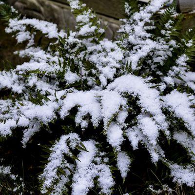 Printemps hivernal
