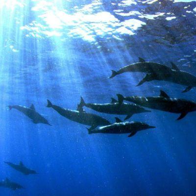Quand les dauphins parlent