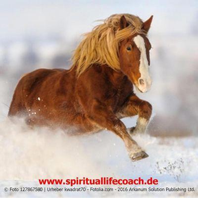 """Der """"Pferdeflüsterer"""" - was innere Ruhe bewirken kann"""